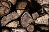Firewood 004-130427