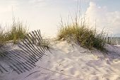 picture of sea oats  - Soft early morning sunlight paints the dunes and sea oats on a sandy beach accented by weathered wooden sand fences - JPG