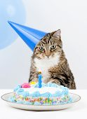 Cat Birthday Party