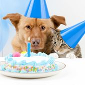 stock photo of dog birthday  - Dog and cat Birthday party with cake - JPG