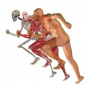 foto of human muscle  - High resolution conceptual 3D human ideal for anatomy and health designs - JPG