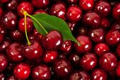 stock photo of cherries  - Background of ripe cherries - JPG