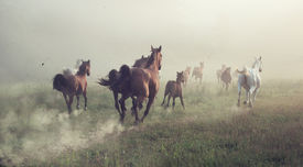picture of fillies  - Horses in dust - JPG