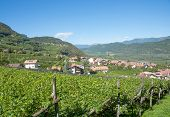 stock photo of south tyrol  - famous Wine Village of Tramin at south tyrolean Wine Route near Merano - JPG