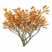 Exotic flower tree isolated.
