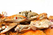 Hot Steamed Sea Crabs