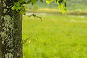 Stamb With Lichen