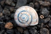 Small Snail Over Volcanic Gravel