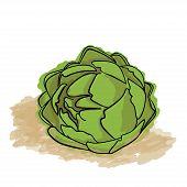 Green Artichoke