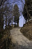 Mountain Trail In Early Spring