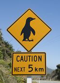I like this pinguin.