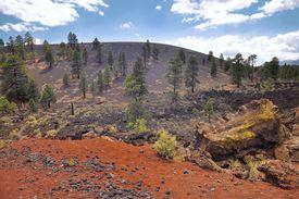foto of scoria  - Pine trees at Sunset Crater volcano in Flagstaff - JPG