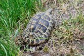 stock photo of laying eggs  - Turtle Laying Eggs in garden on summer time - JPG