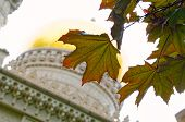 Maple Leaves Against Golden Dome