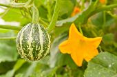 Decorative pumpkin flower