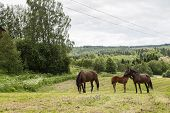Calm Scenery With Horses