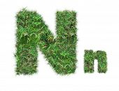 Letter N On Green Grass Isolated