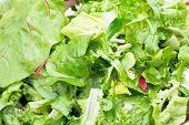 Green Leaves In Fresh Italian Lettuce Appetizer