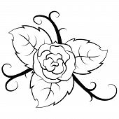 black and white illustration Rose