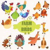 Cute Farm Birds.turkey, Chicken, Goose, Duck