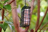Hanging Green Bird Feeder