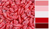 Background of dried goji berries  with complimentary swatches.