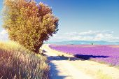 country road near Lavender field. The plateau of Valensole in Provence
