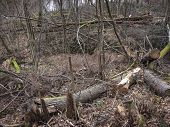 Broken Tree In The Mountain Wood