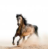 Stallion On A White