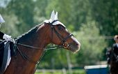 picture of horse-riders  - children dressage - JPG