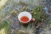 Cup of tea on the moss