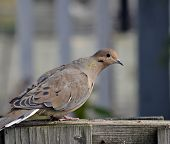 picture of bird fence  - a bird alert while perched on a fence - JPG