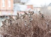 a flock of sparrows