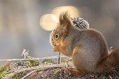 Squirrel Lights Behind