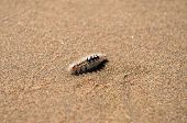 millipede on the sand