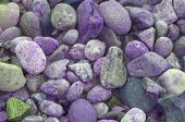 Purple Rocks