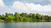 picture of swamps  - Swamp land under sunlight with cloudy blue sky - JPG