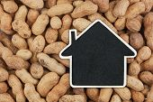 House Pointer, The Price Tag Lies On  Peanuts
