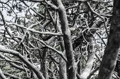 mystic branches abstraction