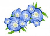 picture of forget me not  - the Illustration of Spring Forget - JPG