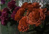 picture of trumpet flower  - Close up Orange trumpet Flame flower Fire - JPG