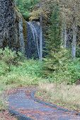 picture of horsetail  - Horsetail Falls Yakima Washington USA scenic view of the stream cascading over the top of the basalt ledge a seasonal creek that varies greatly in the amount of water flowing down the rock face - JPG