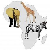 stock photo of herbivore animal  - The Africa and its animals  - JPG