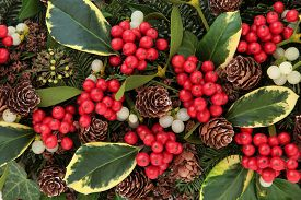 picture of greenery  - Winter and christmas abstract background with variegated holly - JPG