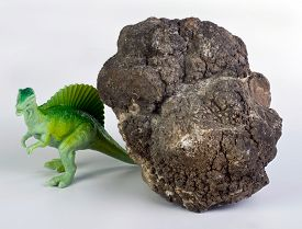 foto of pooping  - Real dinosaur poop called coprolite 140 million years old - JPG