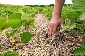 image of humus  - Hand men on the background field - JPG