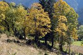 Hiking Trail In Autumn
