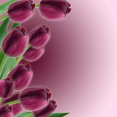 Tulips Spring Border Design