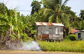 Garbage Burning Jungle Clapboard House Corn Island Nicaragua
