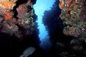 Caribbean Crevice